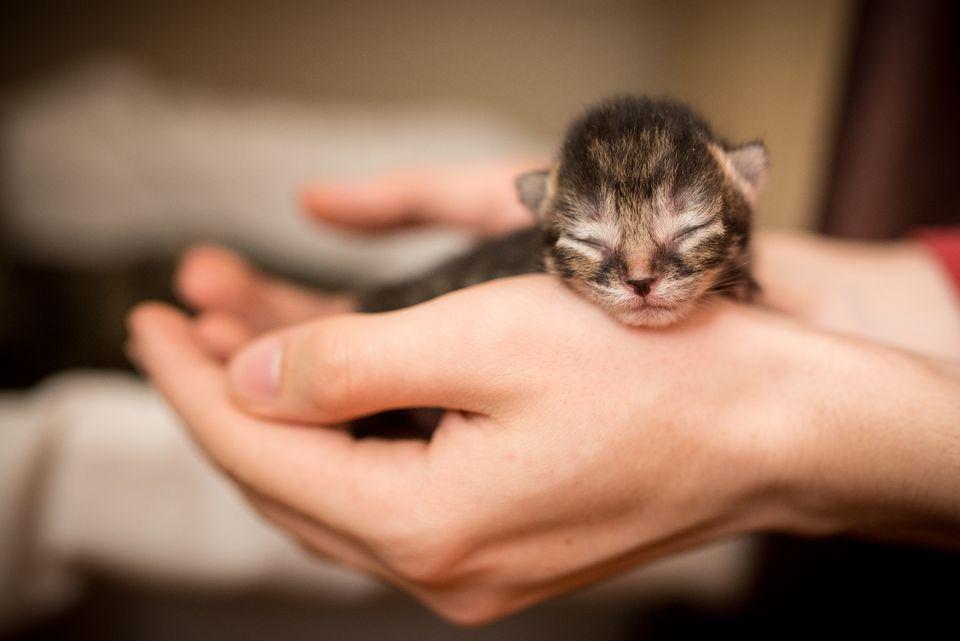 Un gatito recién nacido