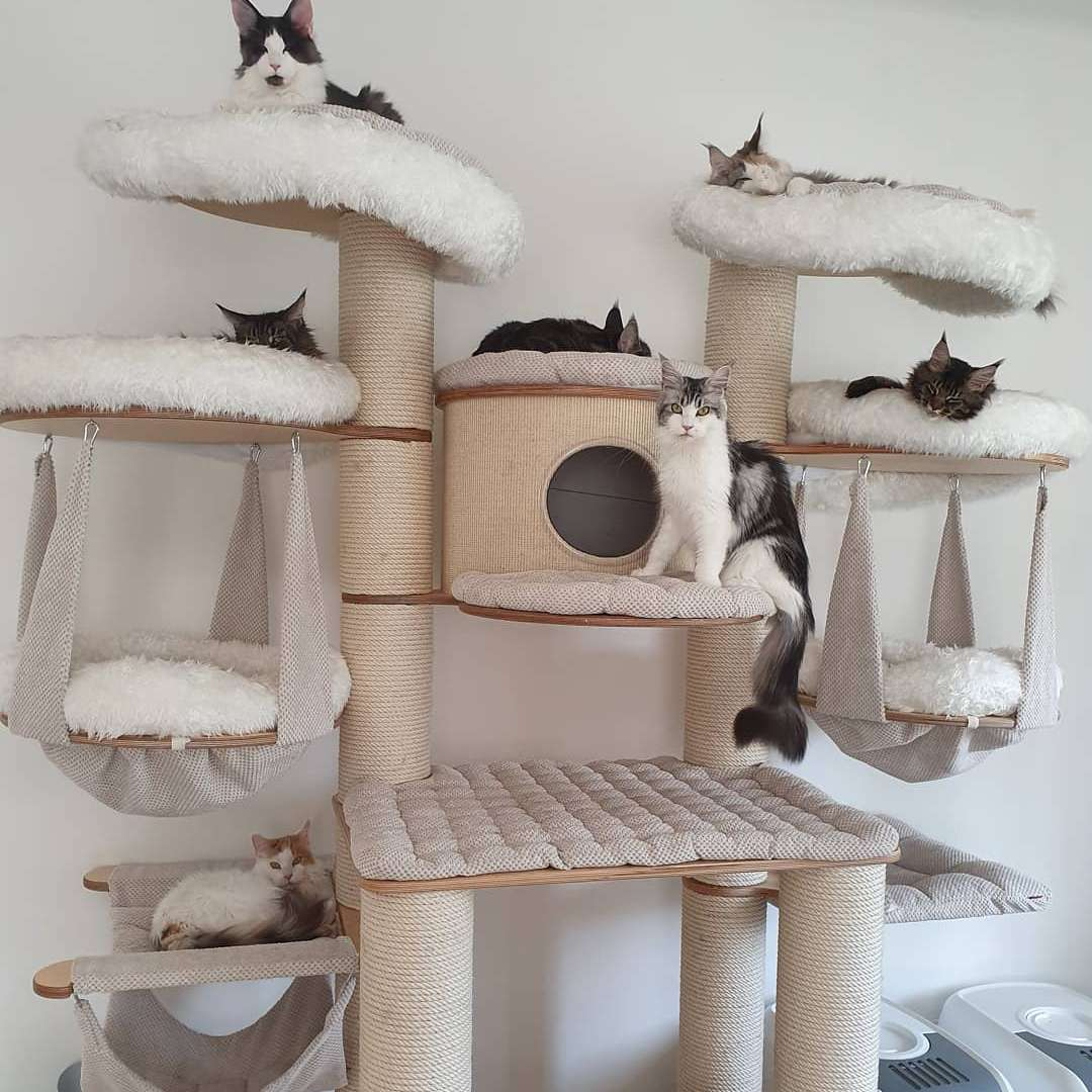 10 Amazing Cat Trees You Have To See