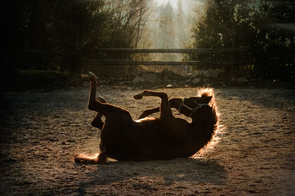 Horse rolling on the ground at the end of the day