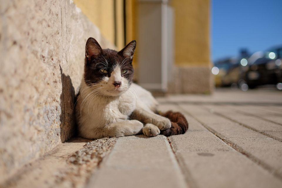 gato salvaje en la acera