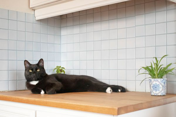 Black cat laying on kitchen counter top