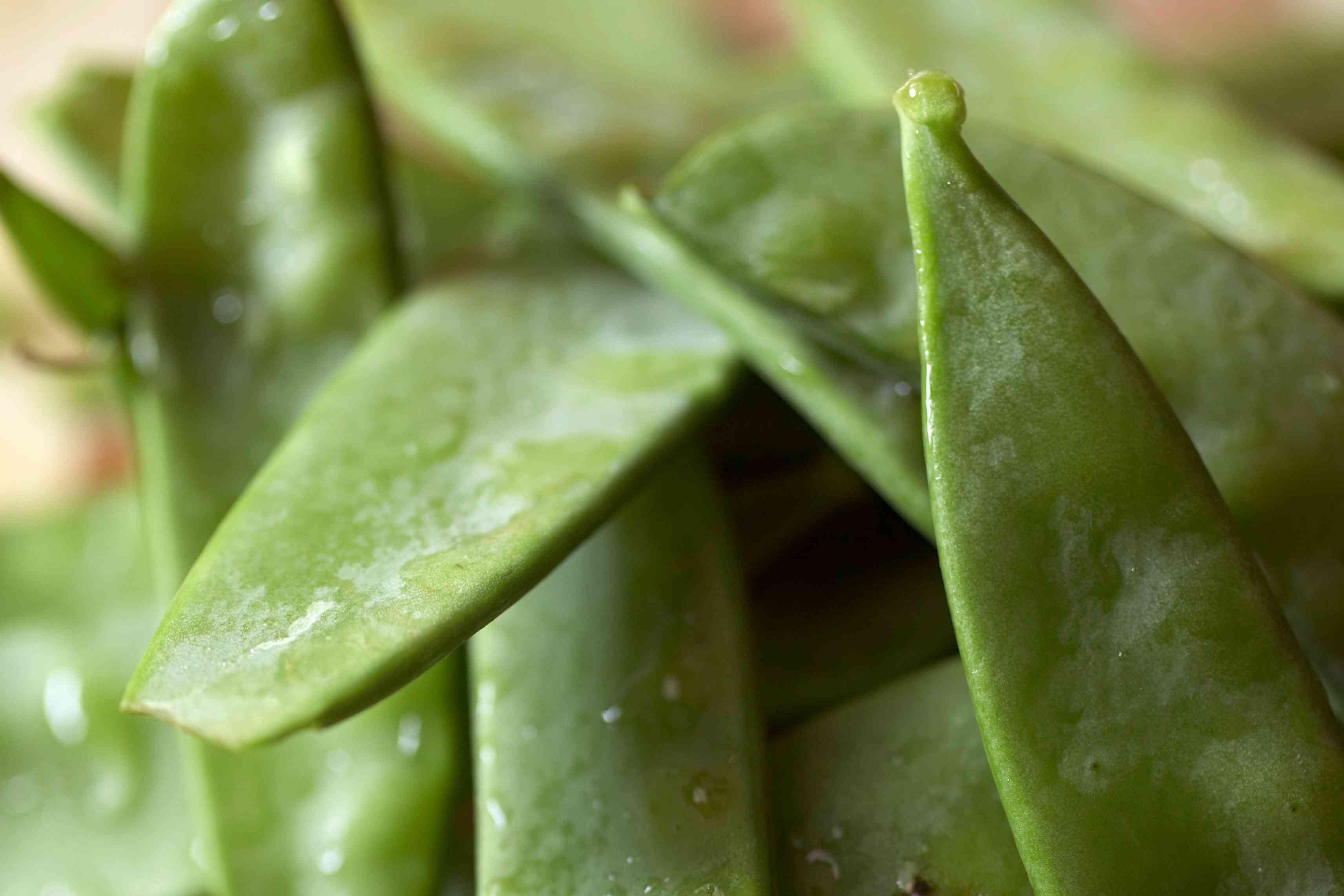 A pile of dewey snow peas