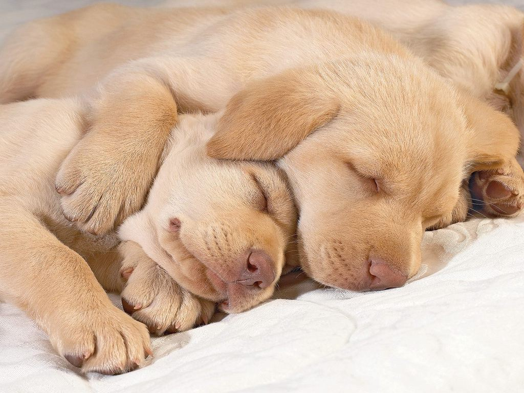 Dogs cuddling together
