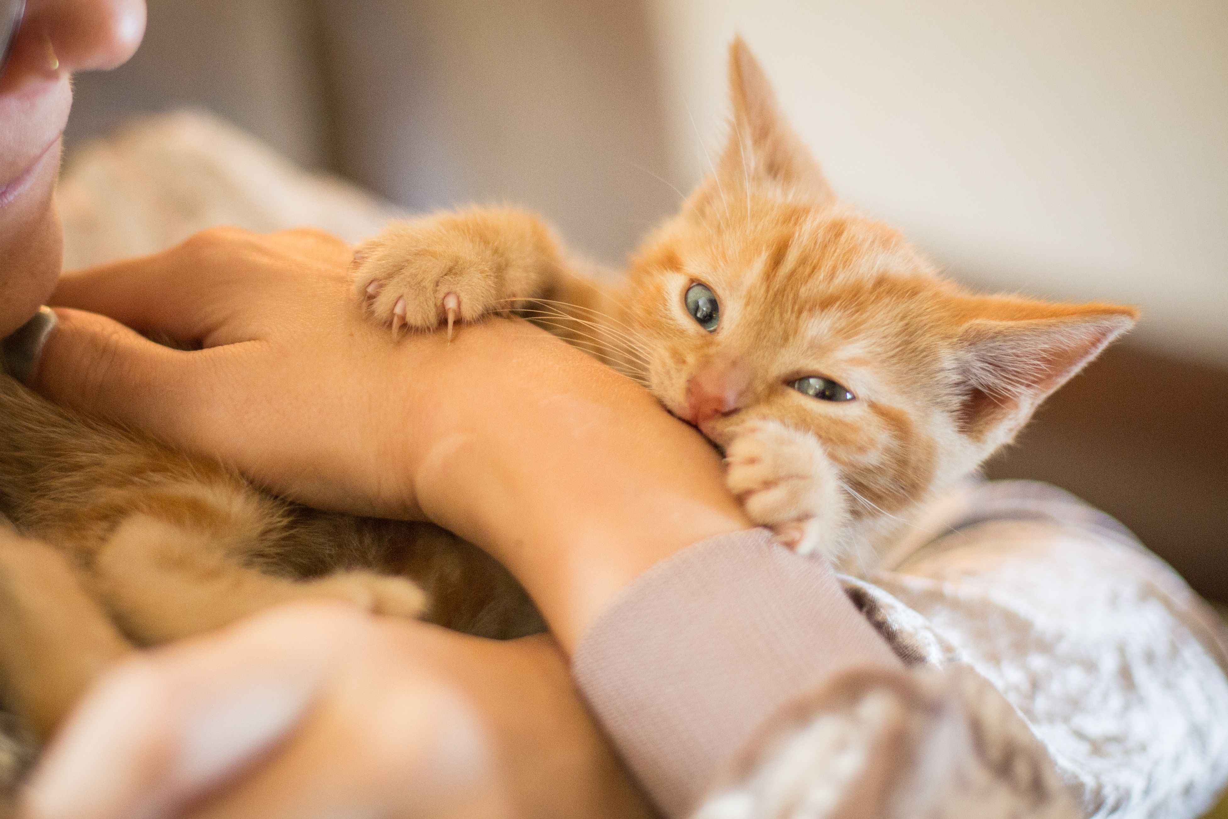 Tips to Stop Your Kitten From Scratching and Biting