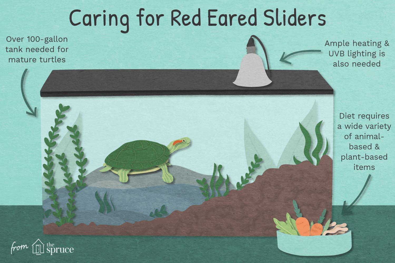 Cuidar la ilustración de los controles deslizantes de orejas rojas