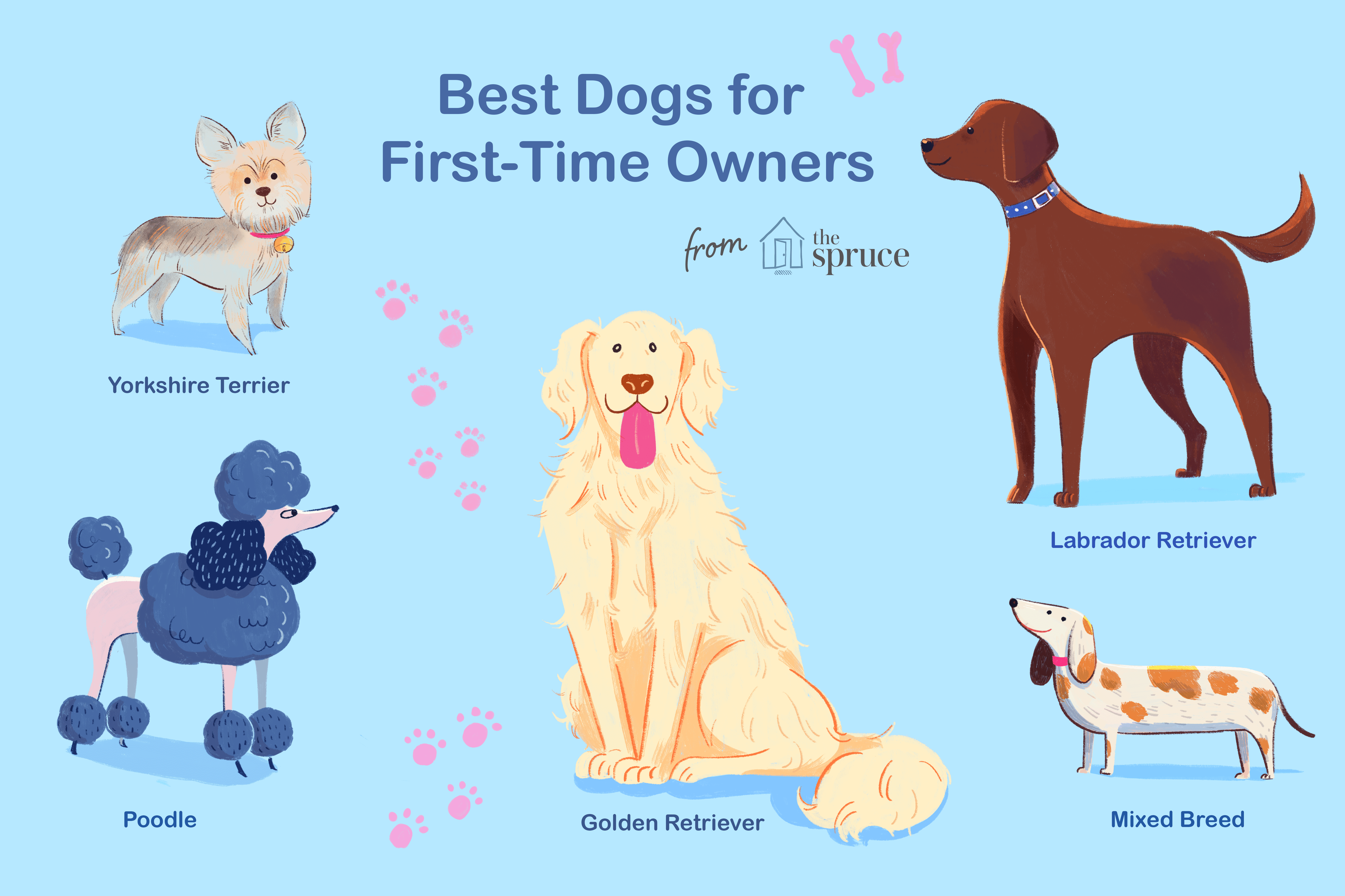Illustration of dog breeds for first time owners