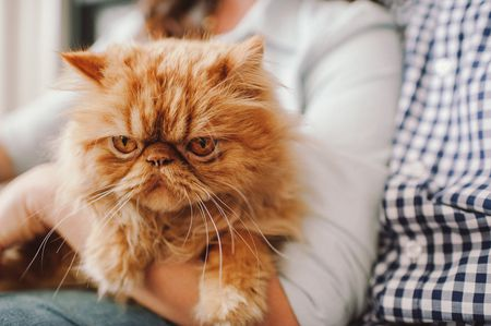 Does Cat Color Influence Cat Personality?