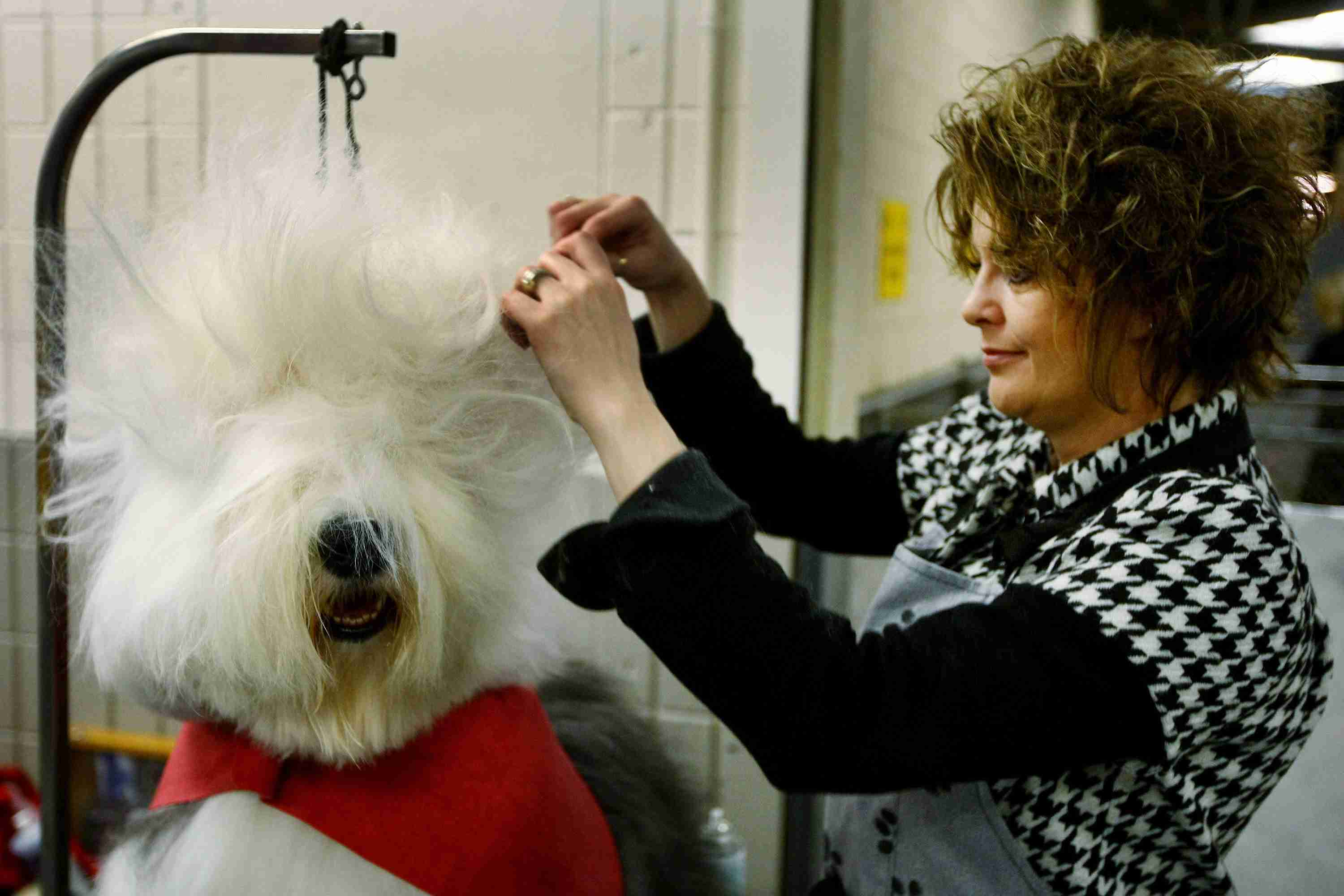 A woman grooming a dog