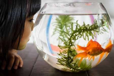 How to Clean a Small Fishbowl
