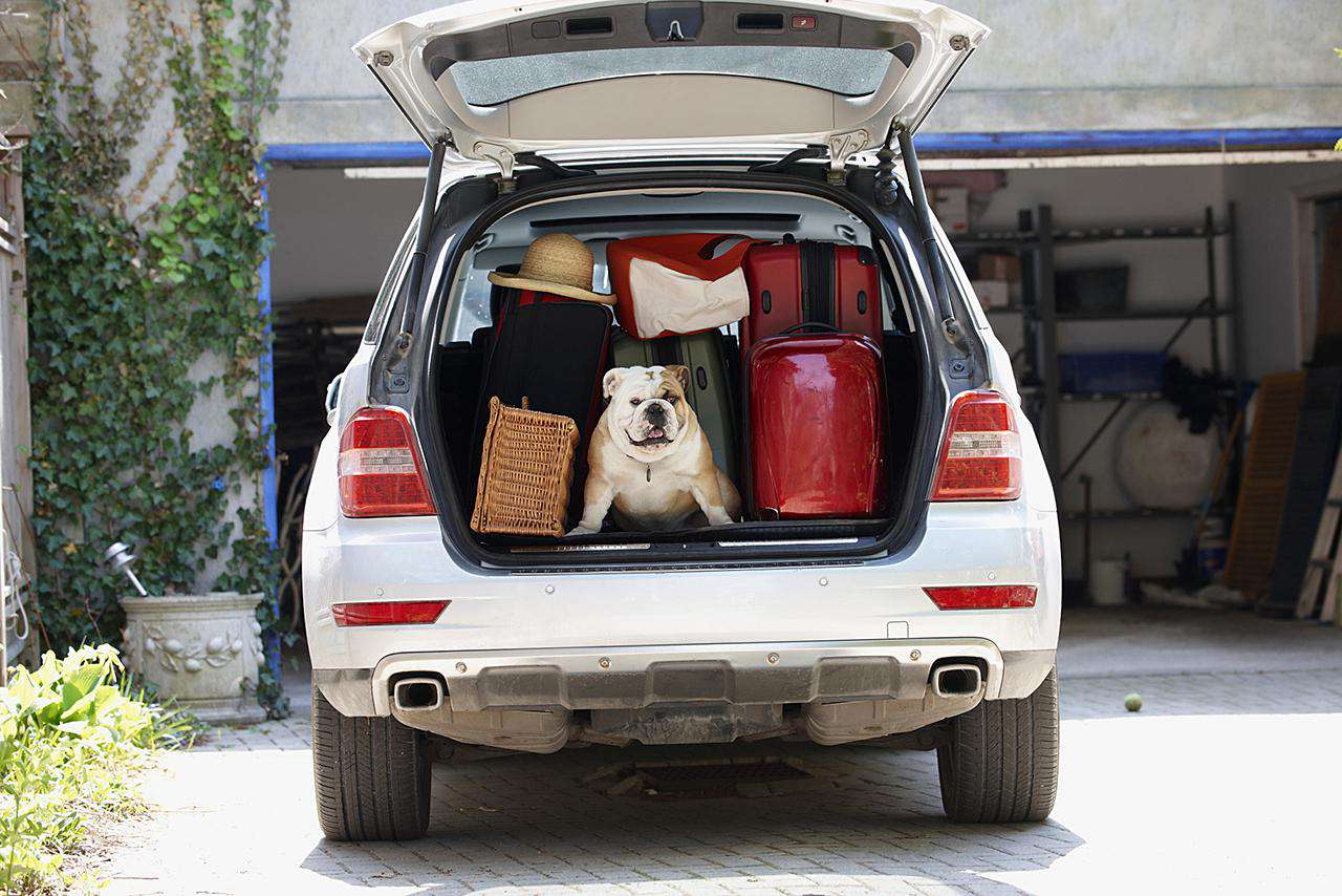 Bulldog packed into the back of a station wagon with moving boxes