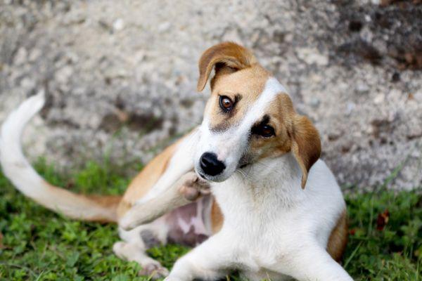 Close-Up Of Dog Scratching