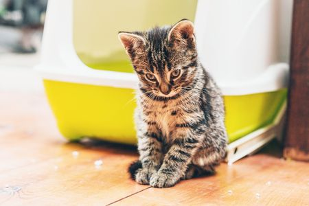 Reasons Why Cats Track Litter and Poop and How to Stop It