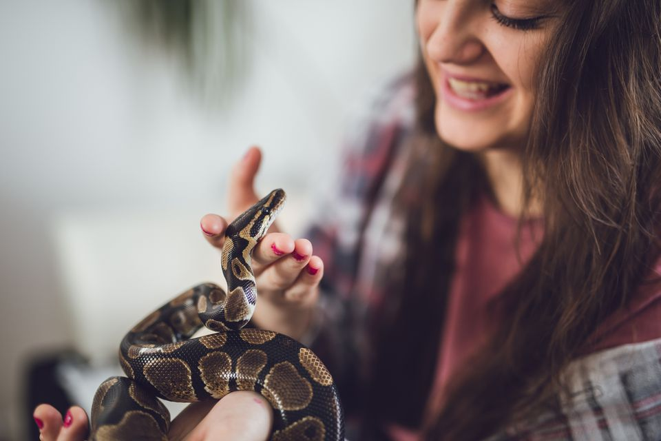 Ball python being pet and held by a girl.