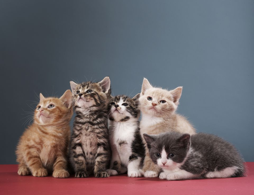 Group of Kittens Looking at Something Just Off Camera
