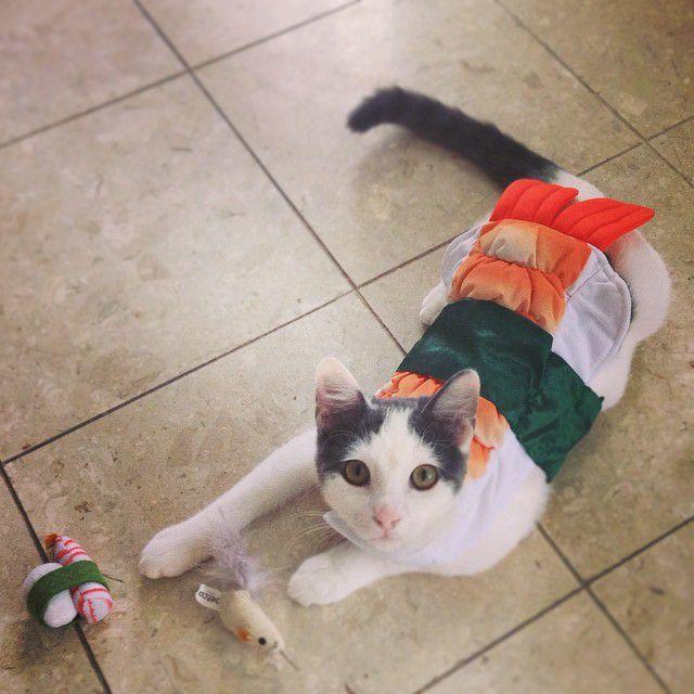 cat in sushi costume