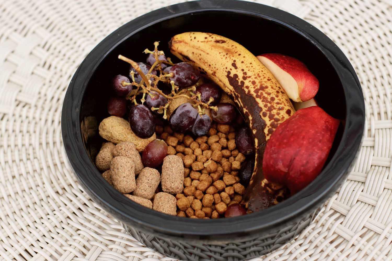 Black ceramic bowl with fresh fruit and grain-free dog food for coatimundi