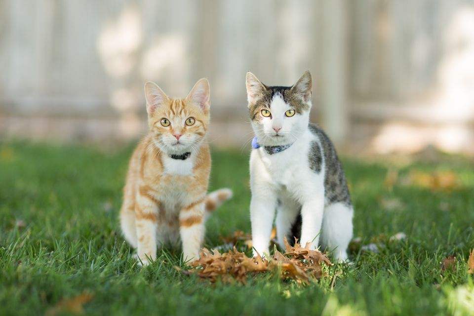 Two kittens outdoors