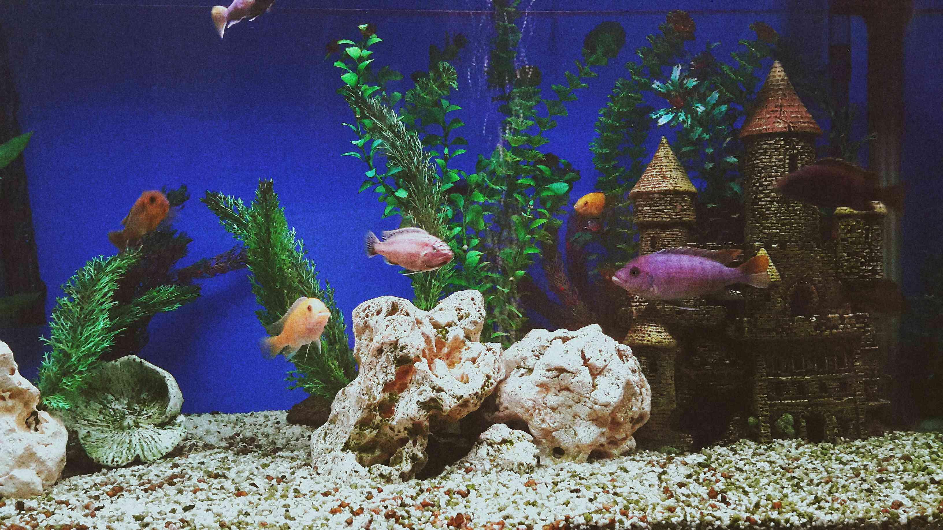 Fish in an aquarium.