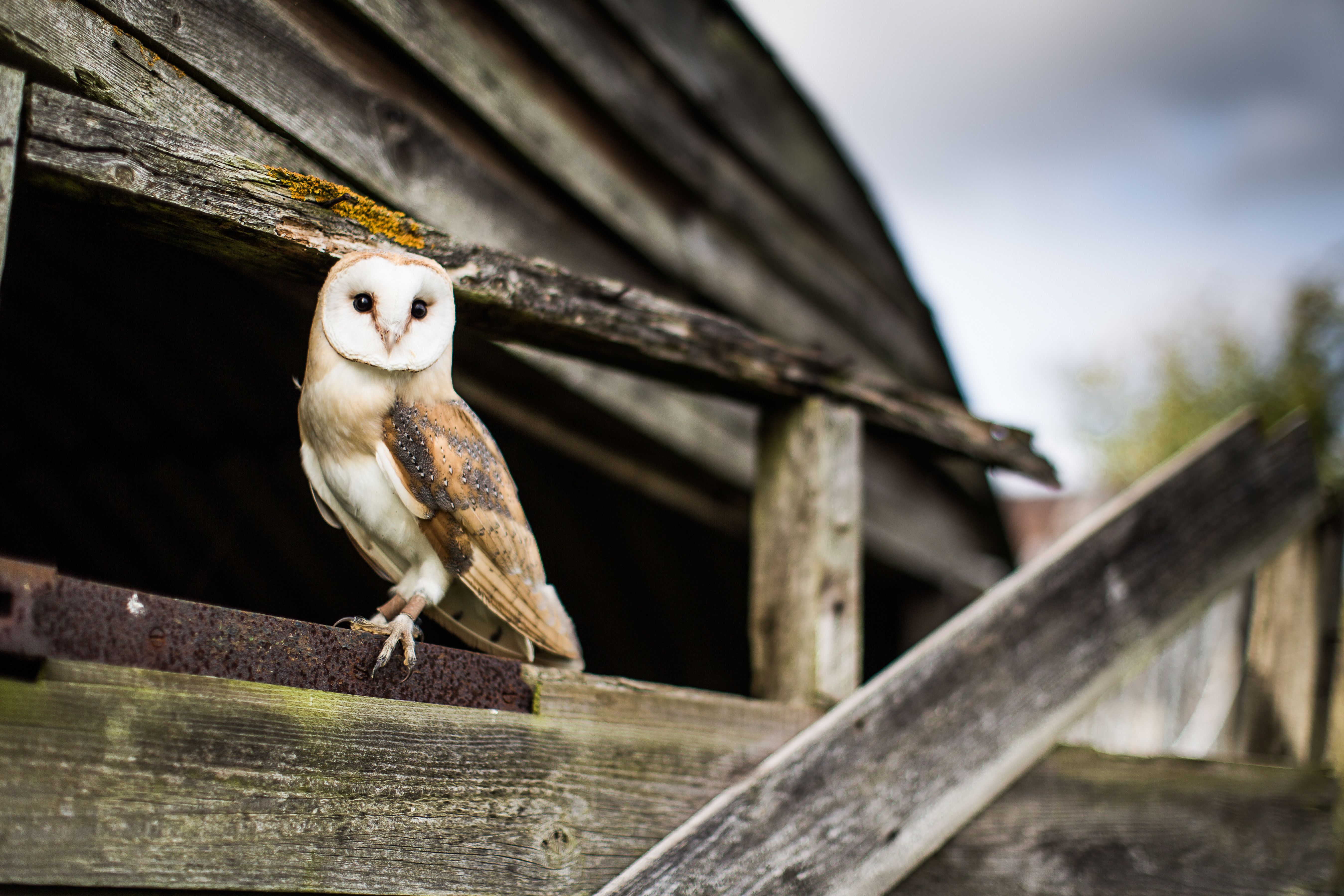 An owl alone