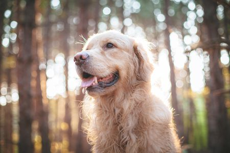 Senior Dementia In Dogs Signs Of Canine Senility