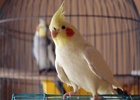 8 Top Friendly Pet Bird Species