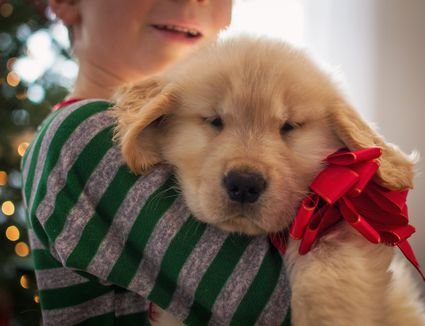 Stop Puppy Problem Chewing: Training Tips That Work