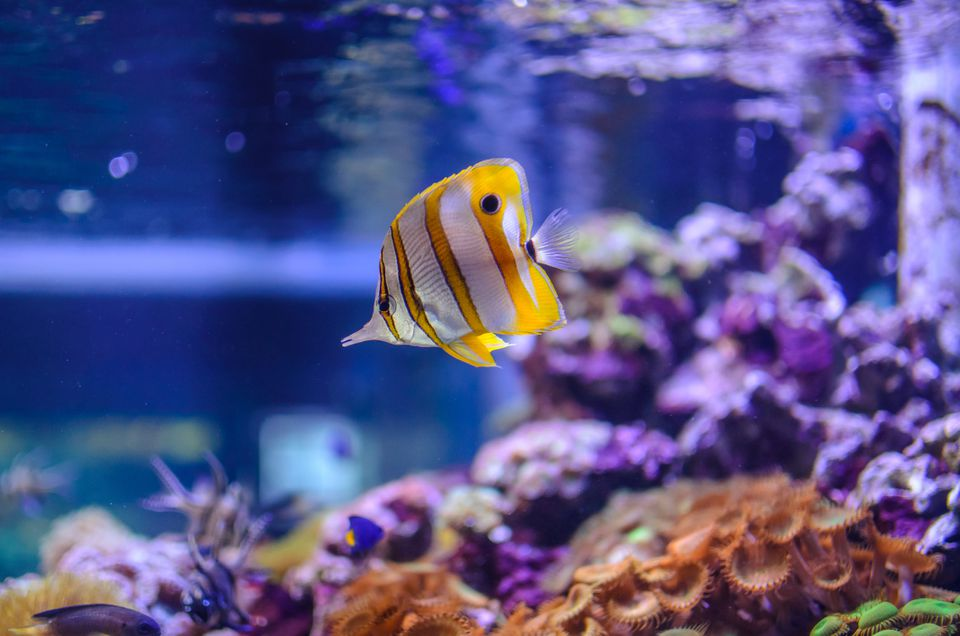 Peces de arrecife en un acuario de agua salada