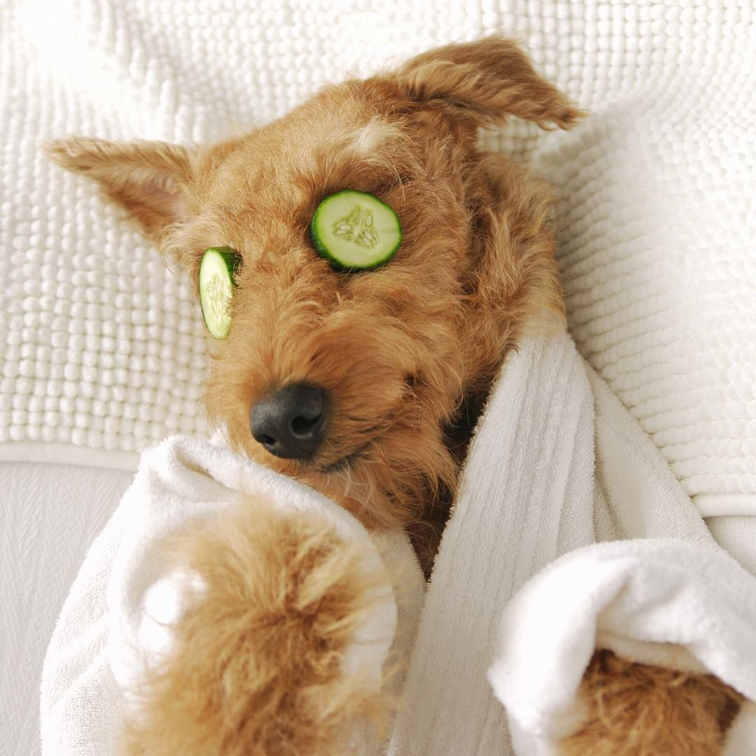 A dog with cucumbers over its eyes