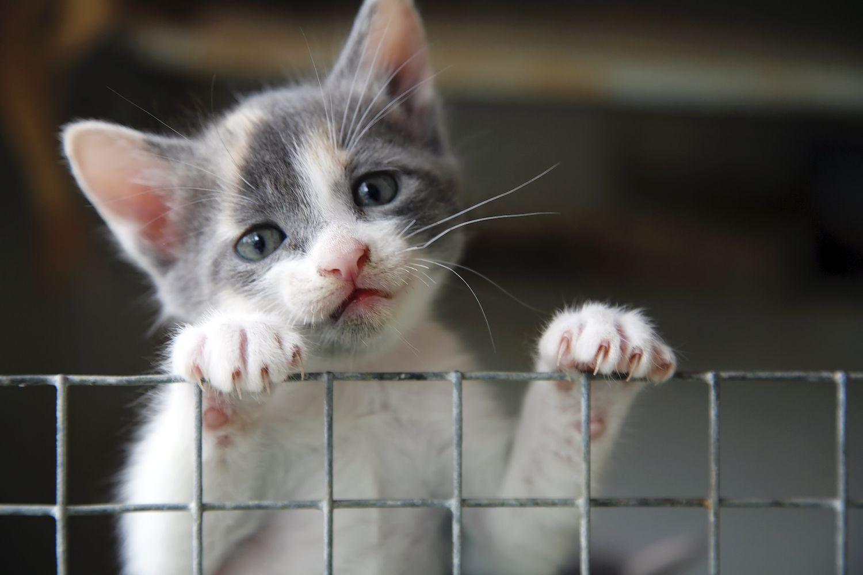 Kitten climbing up a cage.