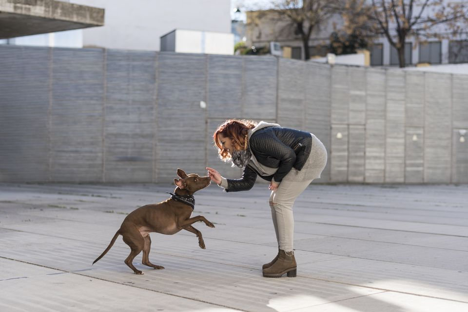 Young woman playing with her dog outdoors