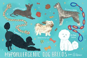 illustration of hypoallergenic dog breeds