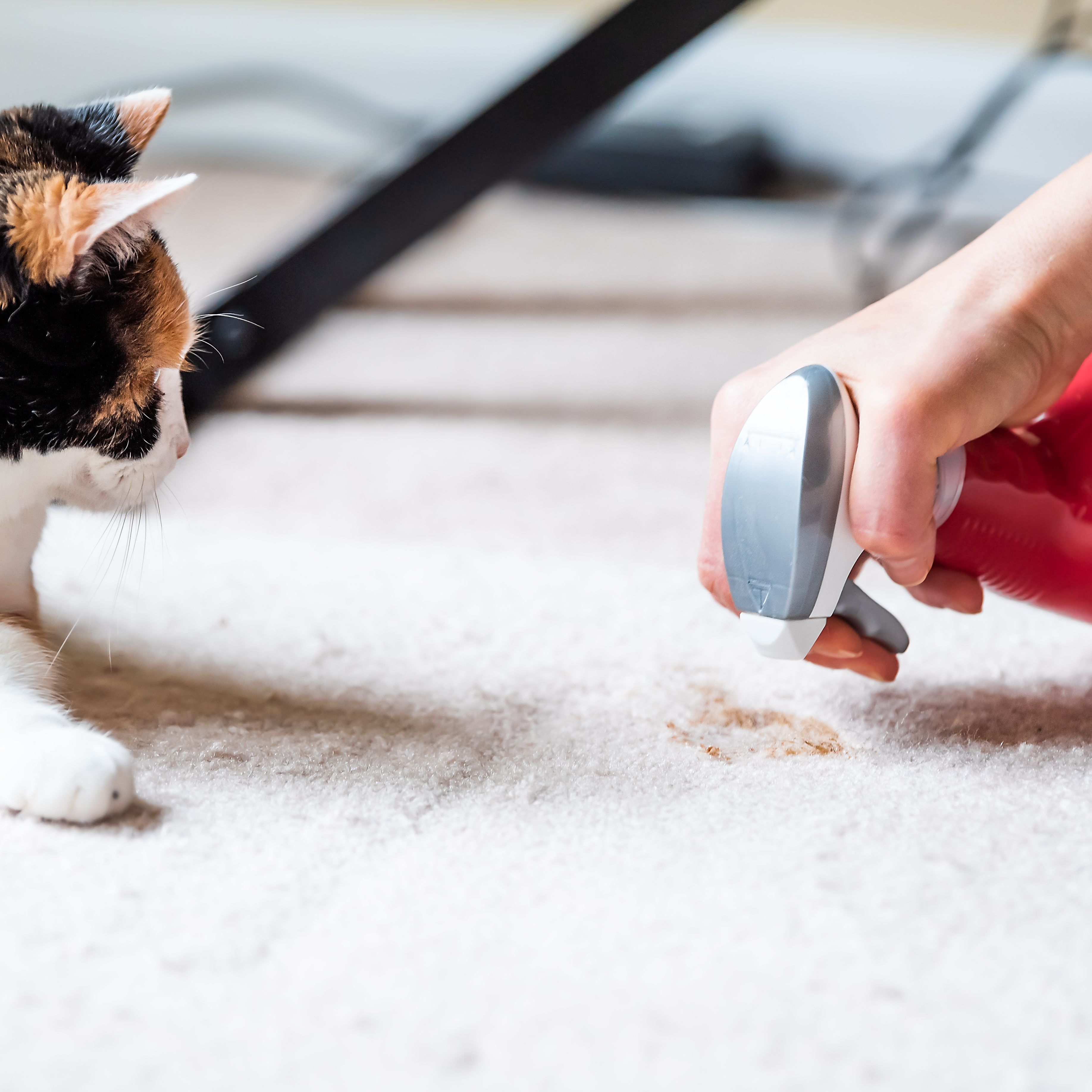 How To Keep Your House Clean With Pets
