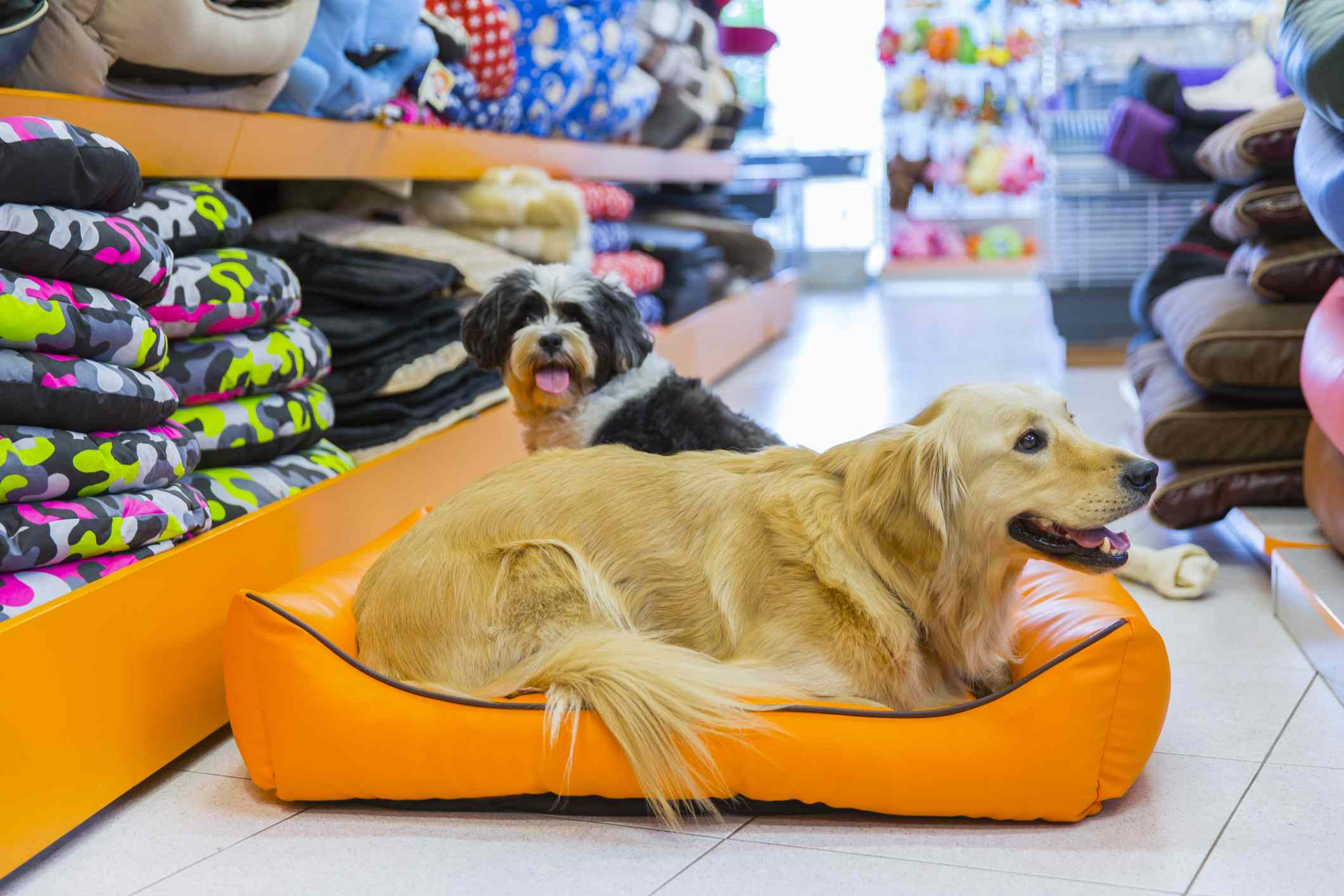 Dogs in a pet store on a dog bed