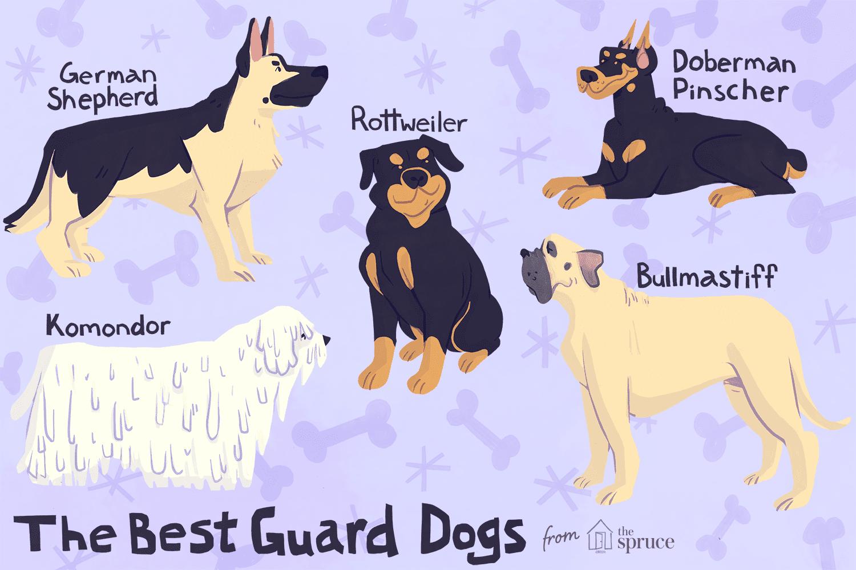 Una ilustración de los mejores perros guardianes