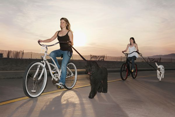 Bikes and dogs