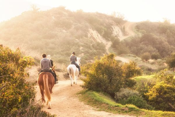 Rear View Of People Riding Horses On Pathway Against Mountain