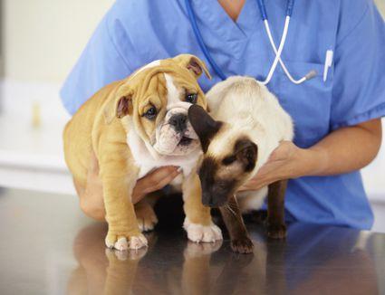 Dogs Eye Diagnosis Od