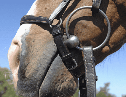 horse carrying a loose ring snaffle bit