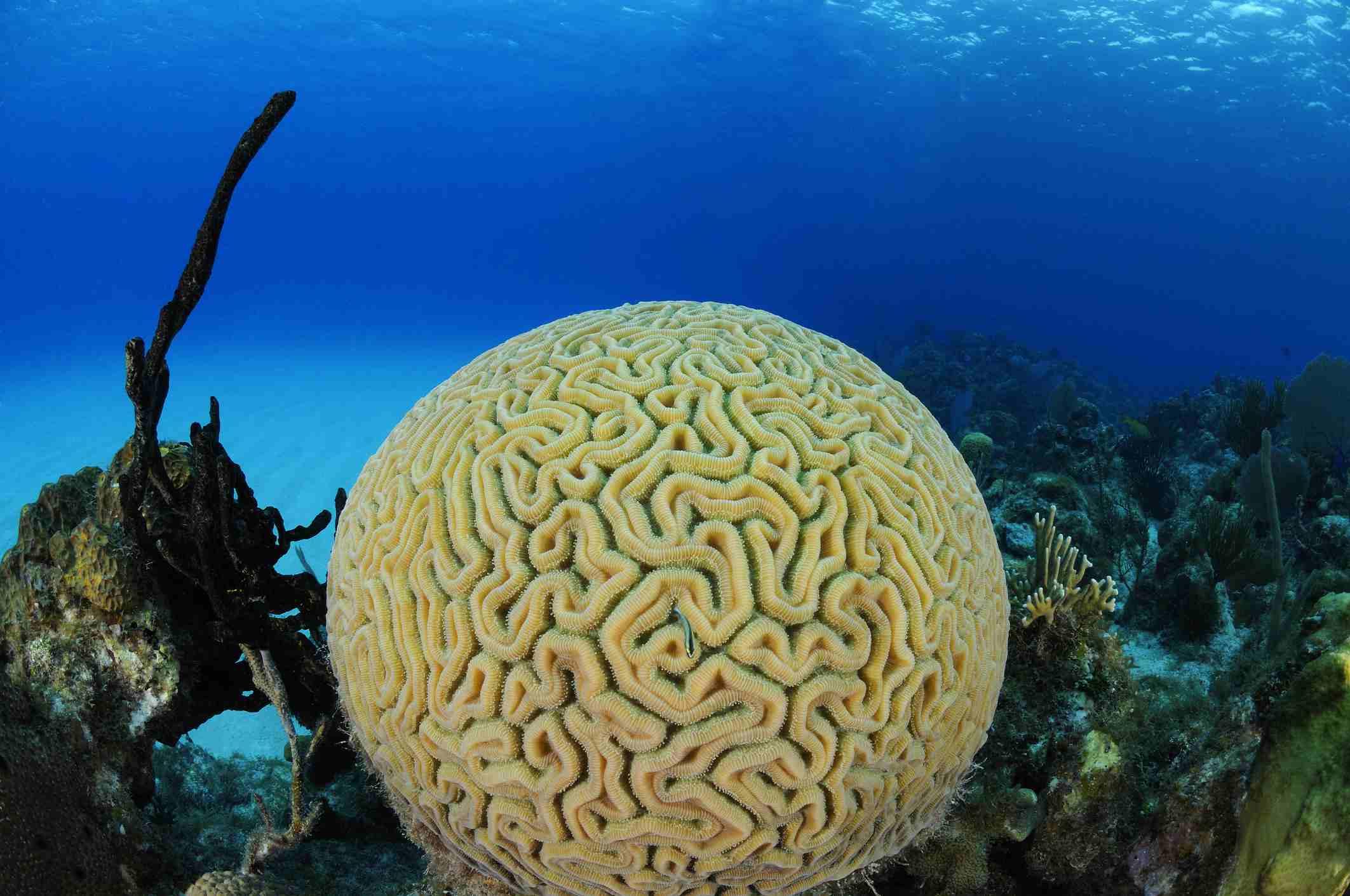 13 Easy Saltwater Aquarium Reef Corals