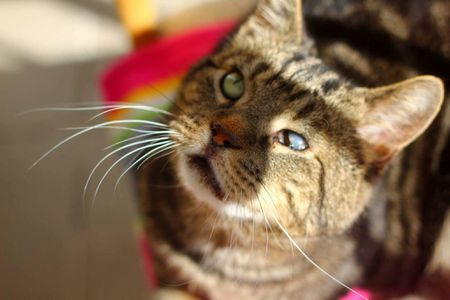fad5c590c Eight Ways to Help a Blind Cat