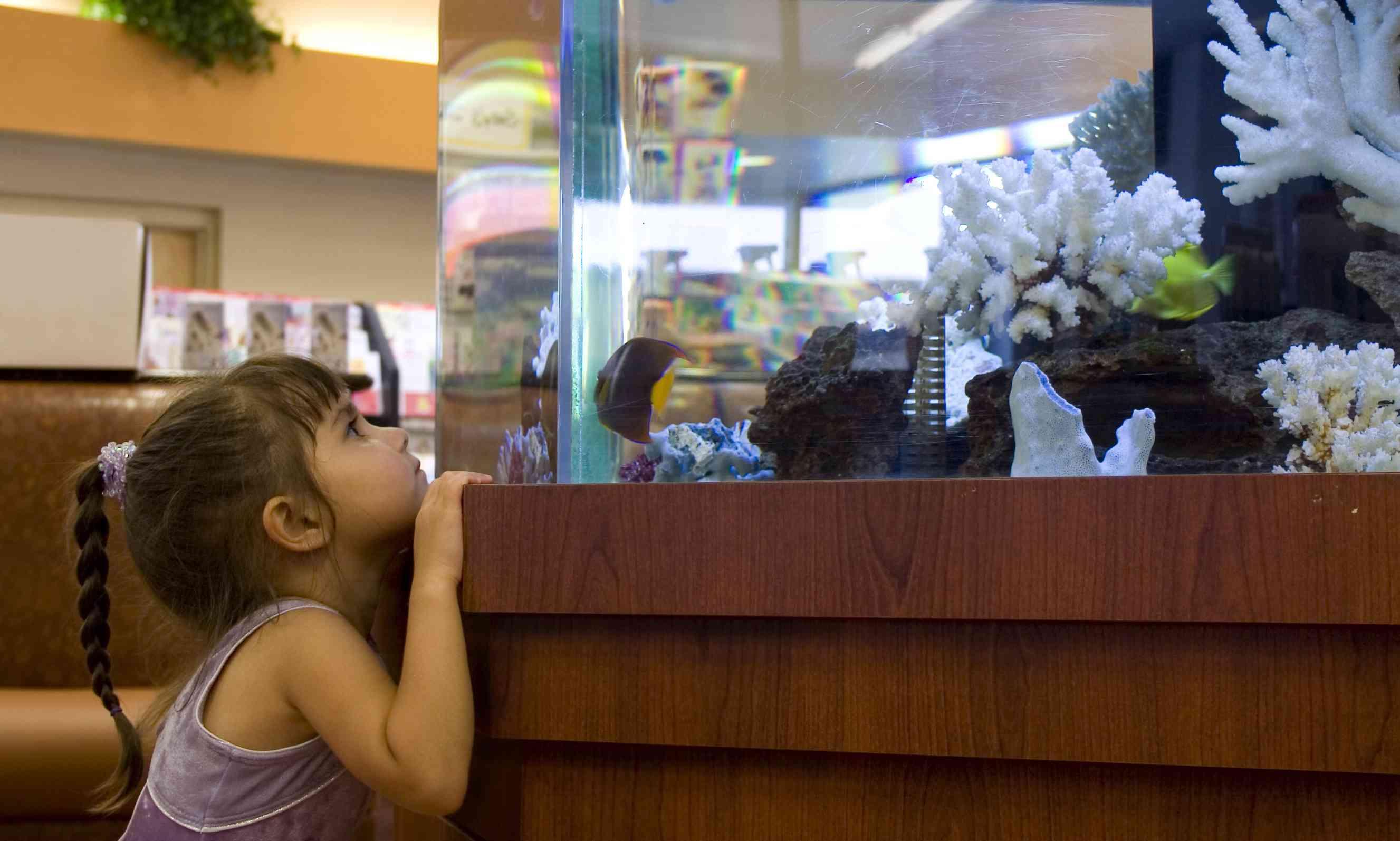 Girl looking at aquarium in waiting room