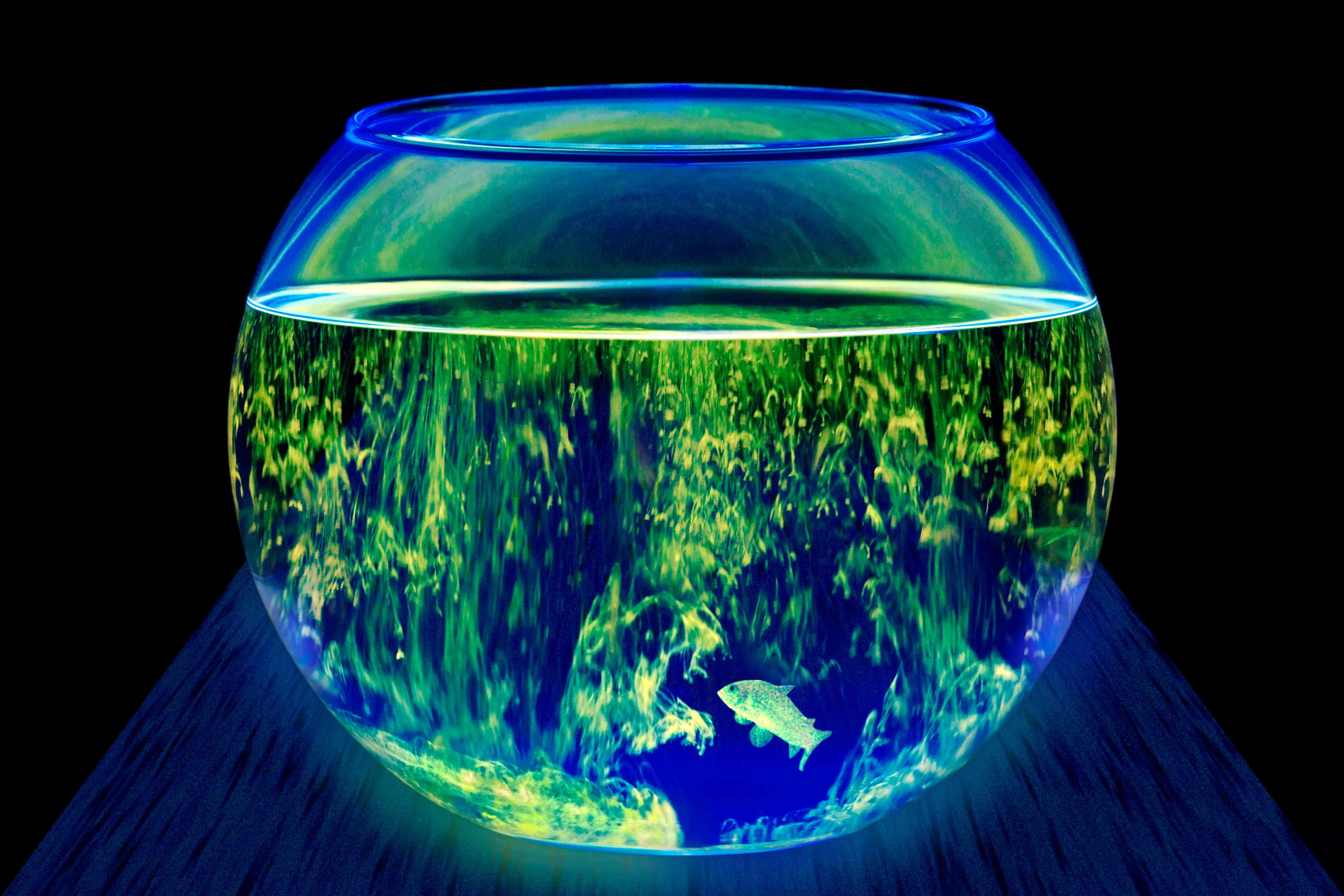 Even the most well-lit bowl is usually the wrong choice for most fish