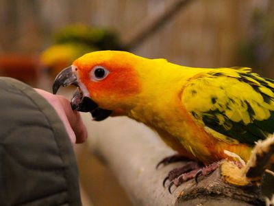 Reasons Why Parrots Bite and How to Stop It