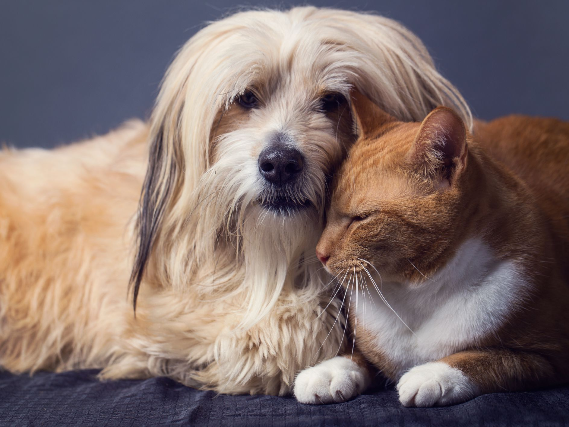Phenobarbital Is Used to Treat Seizures in Cats