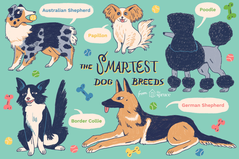 illustration of five smart dog breeds