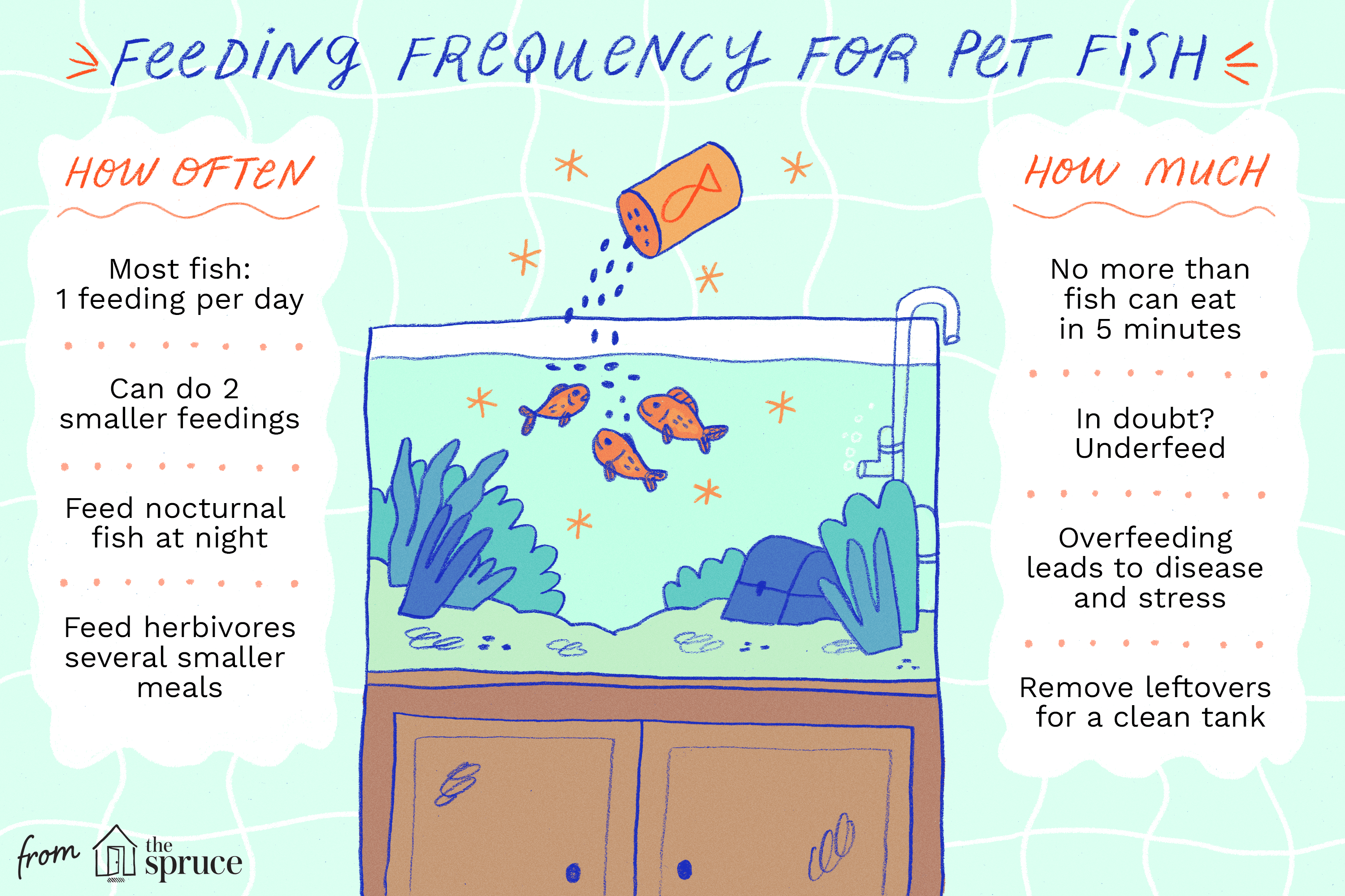 illustration of how often and how much to feed fish