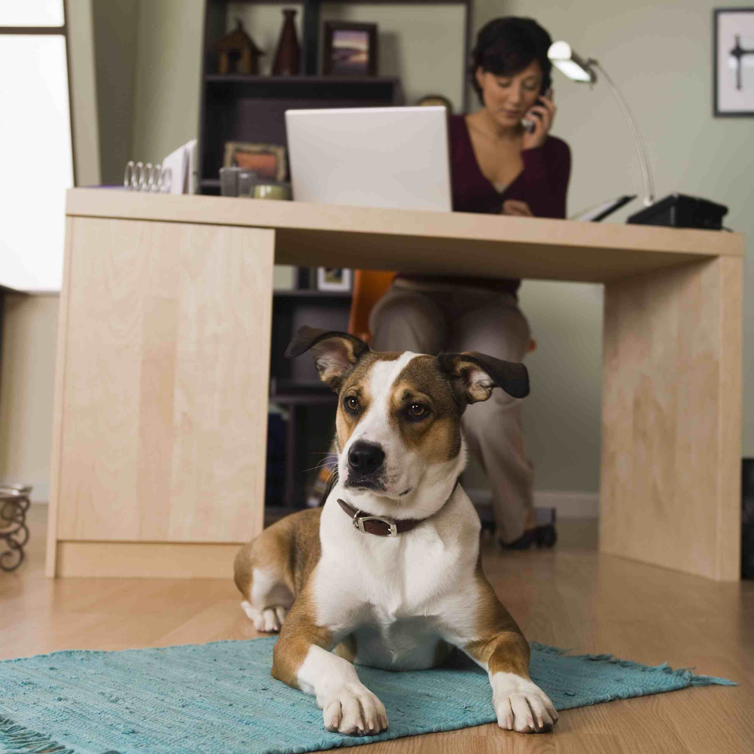 busy person with dog