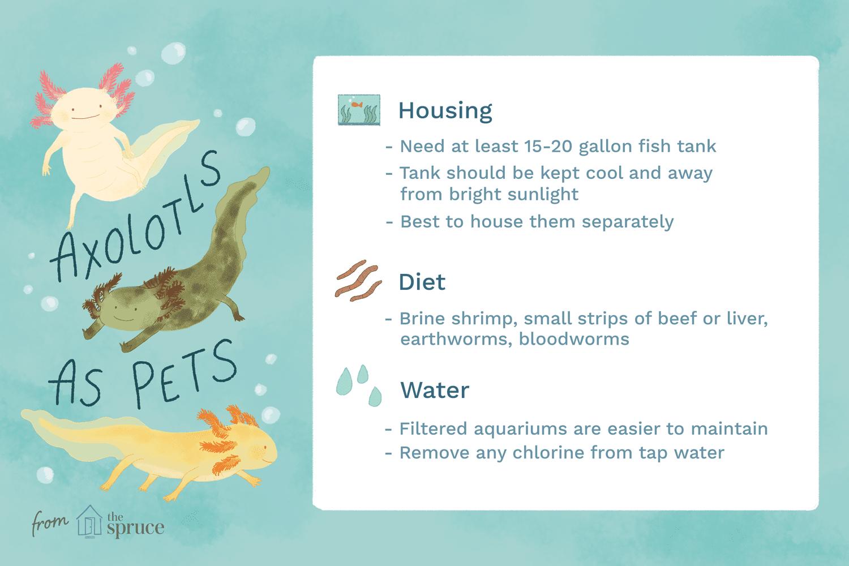 Illustration depicting the needs of a pet axolotl