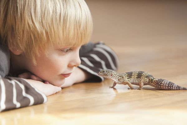 Caucasian boy looking at lizard