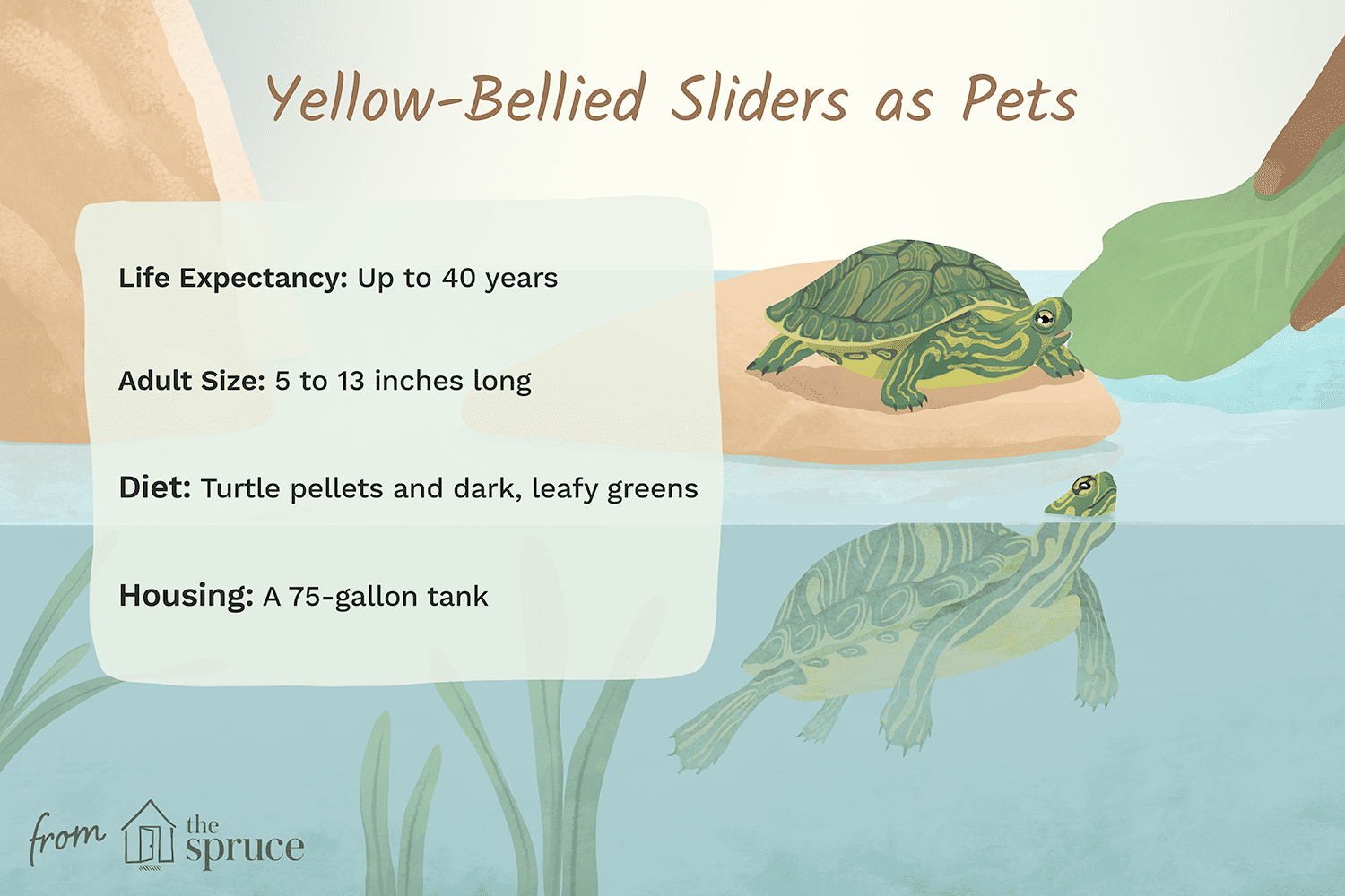 yellow-bellied sliders as pets